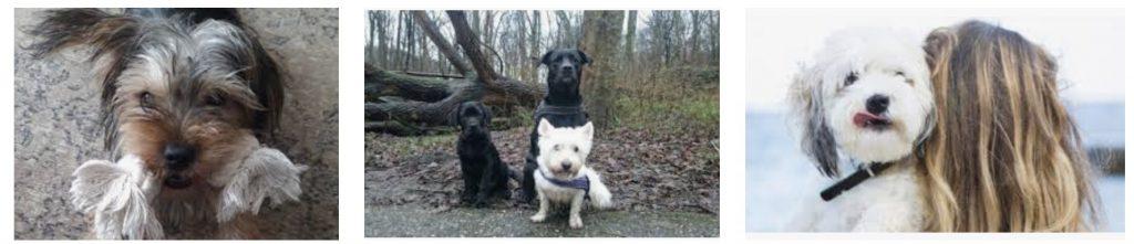 Stichting Verhuisdieren en Zwerfdier helpen huisdieren aan nieuw thuis